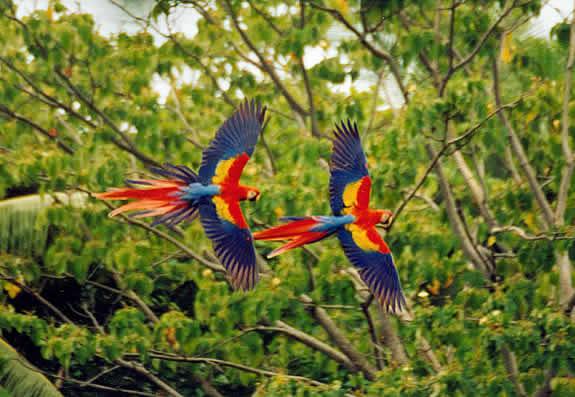 Wildlife-Costa-Rica