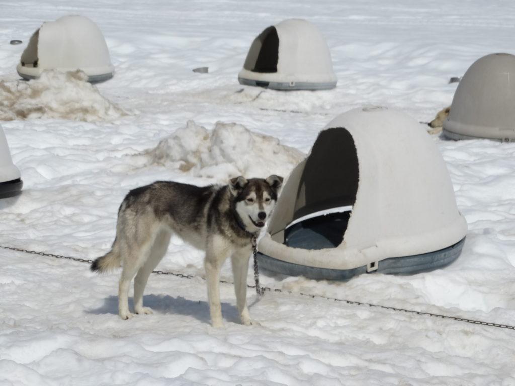 campamento de perros