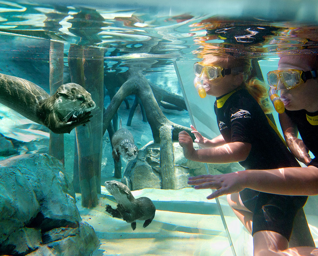 Discovery Cove que hacer