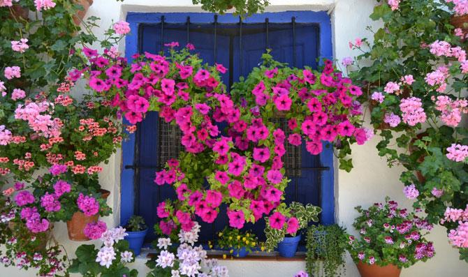 Amuletos verdes las 5 plantas que dan suerte buena vibra for Decoracion casa estilo andaluz