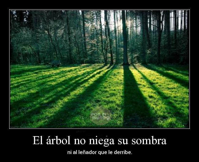 tala_árboles