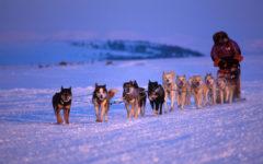 Alaska Polo Norte