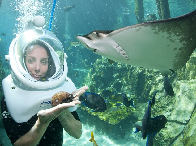 Discovery Cove snorkel