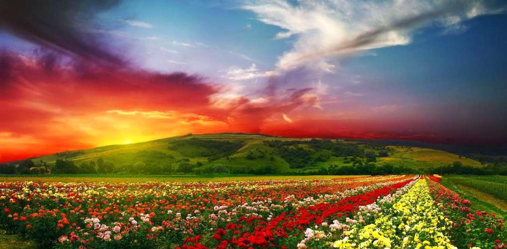 Parque Nacional de las Flores. India