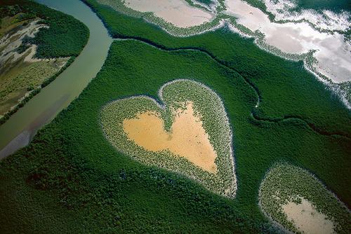 manglar nueva caledonia