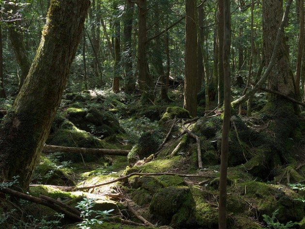 aokigahara Japón
