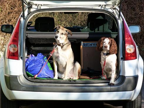 como viajar con mascotas