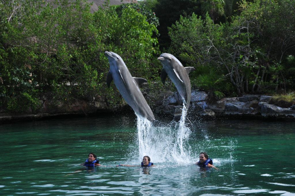 Delfines en Xel Ha