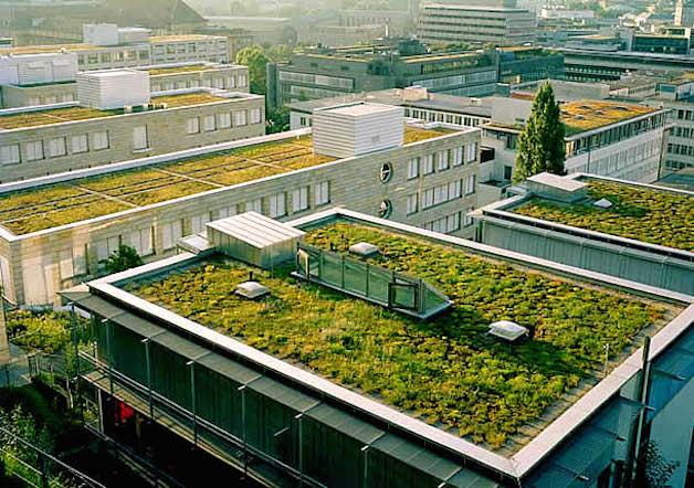 sembrar en los tejados