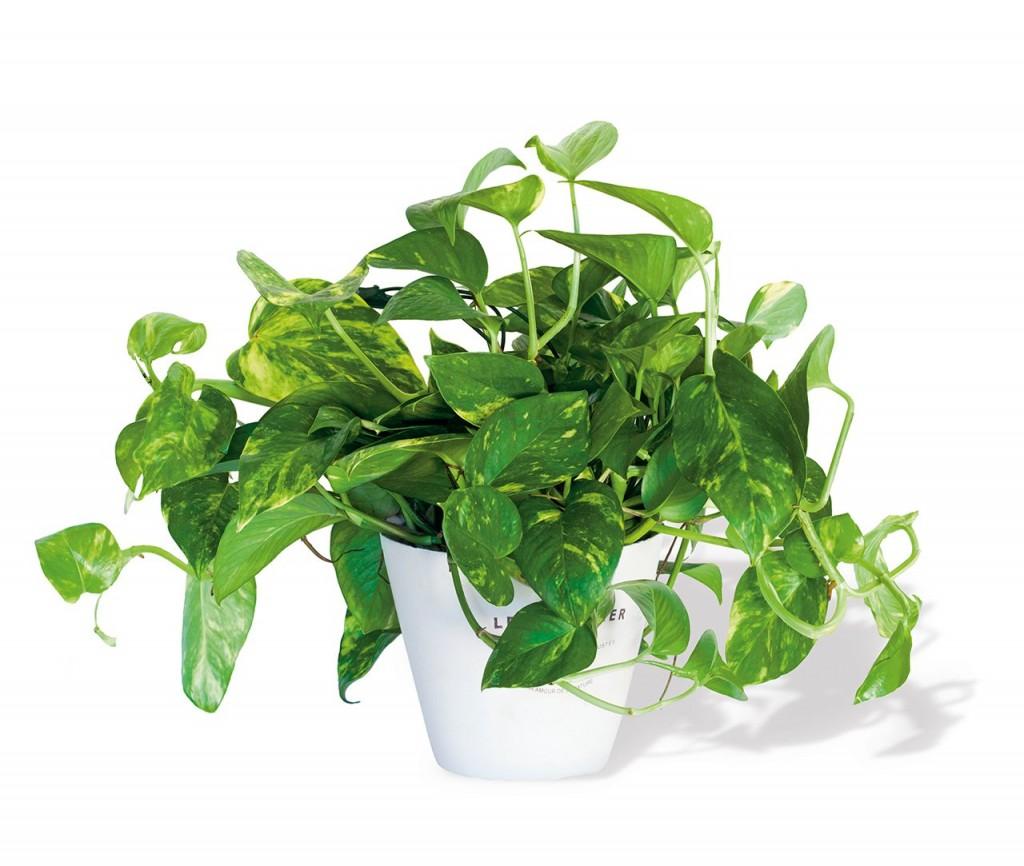 plantas purifican el aire