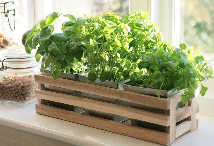 plantas cultivar en casa