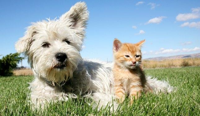 dengue y mascotas
