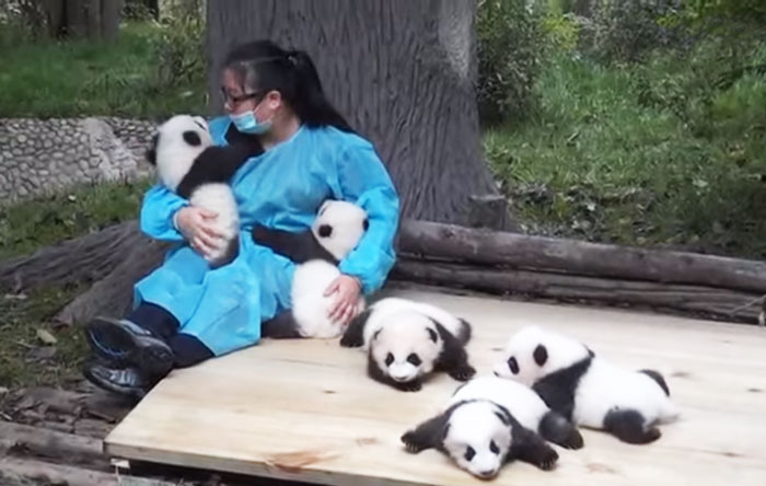 cuidador-de-pandas-1