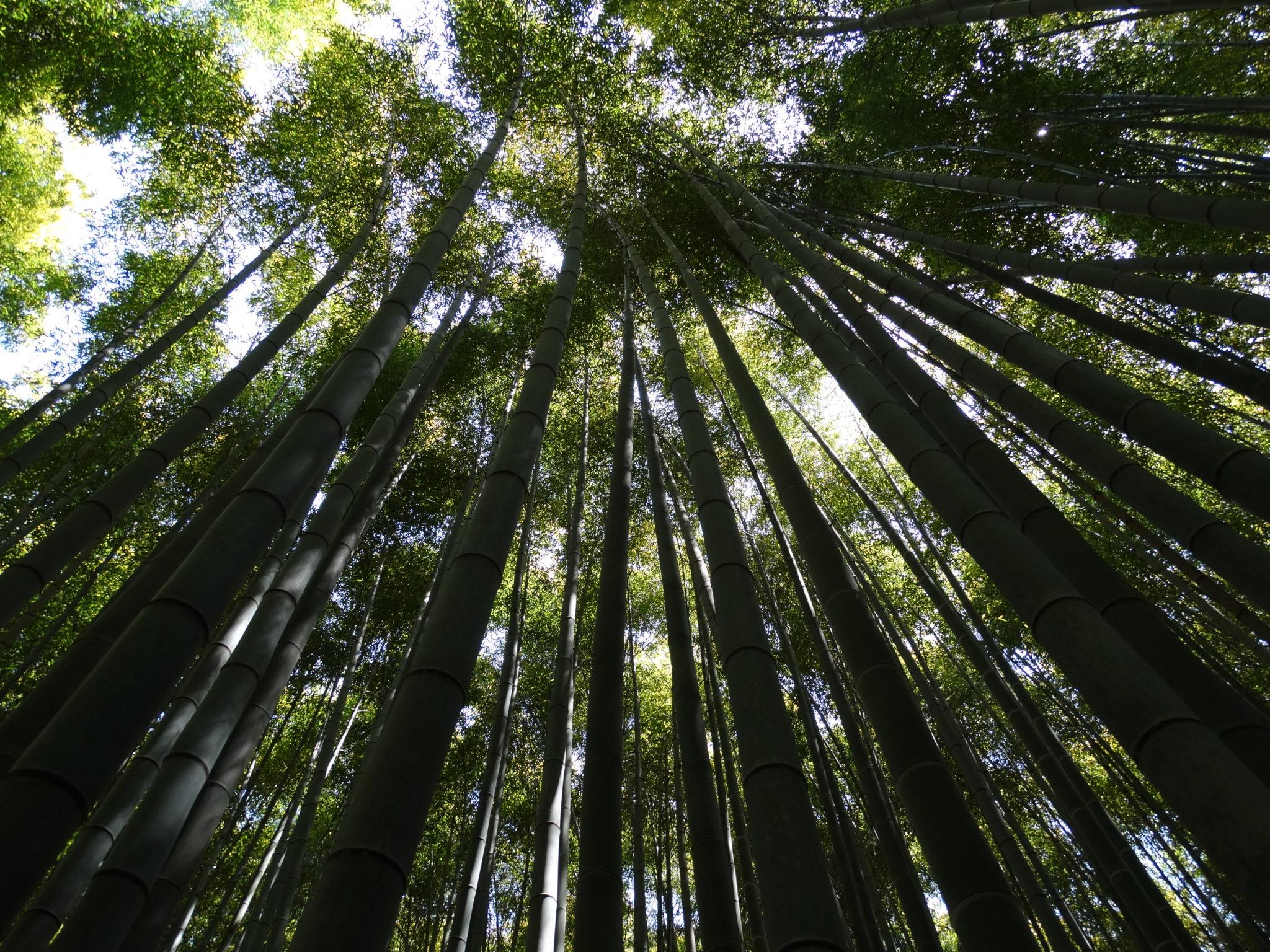 Baño Invisible Japon:Estás en el famoso bosque de bambú de Arashiyama, situado en la