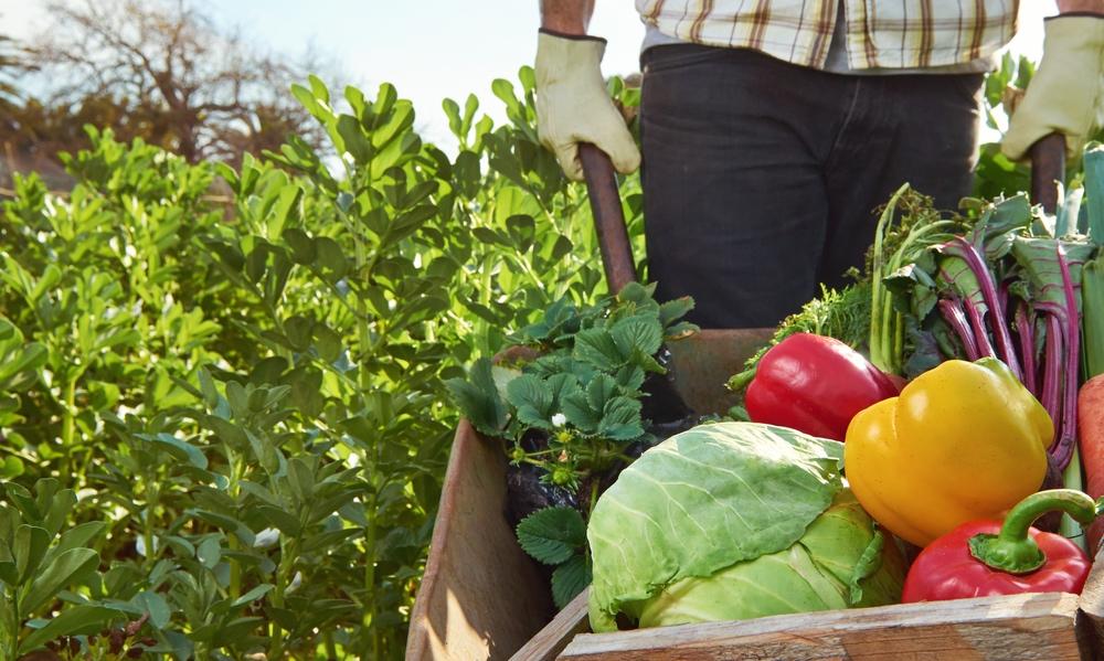 alimentación orgánica 1