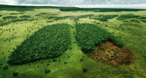 planeta verde1