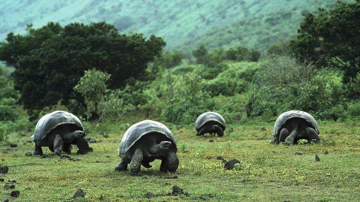 sitios clima riesgo america latina isla galapagos