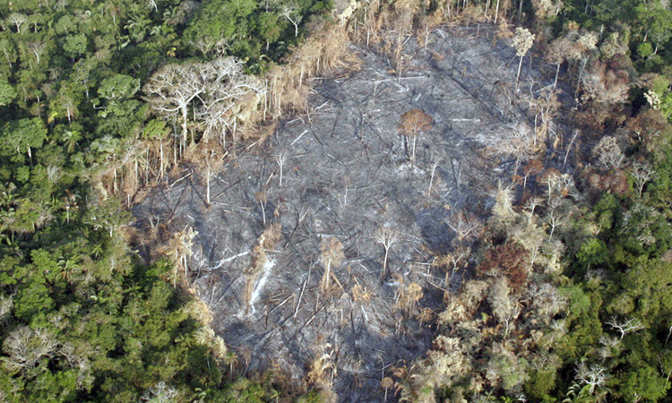 deforestación noruega 1