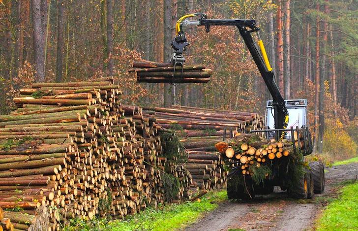deforestación noruega 3