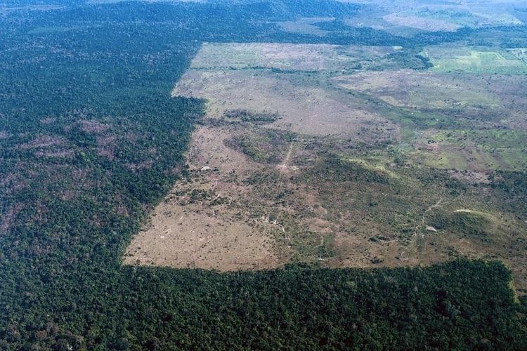 deforestación noruega 4
