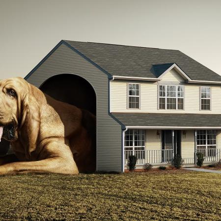 perro-grande-casa-pequena1