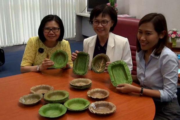 plato hojas 2