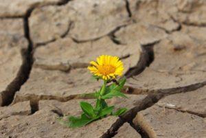 resiliencia dificultad