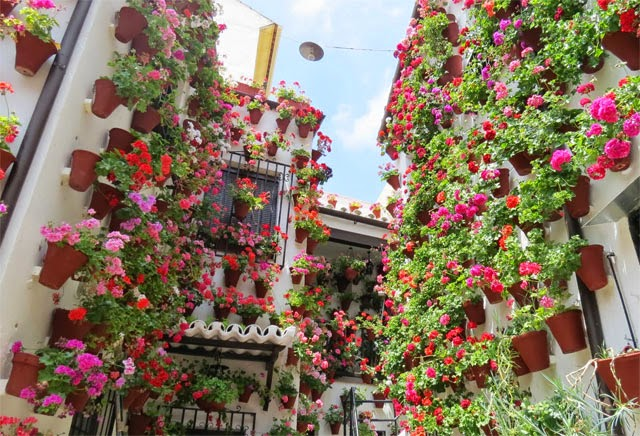 Los-Patios-floridos-de-Córdoba7