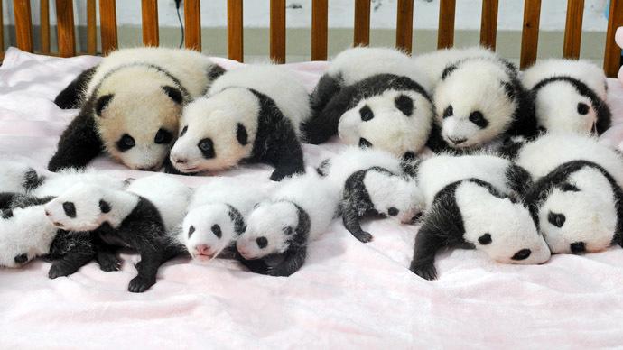 asilo panda 1