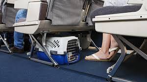 avion_mascota