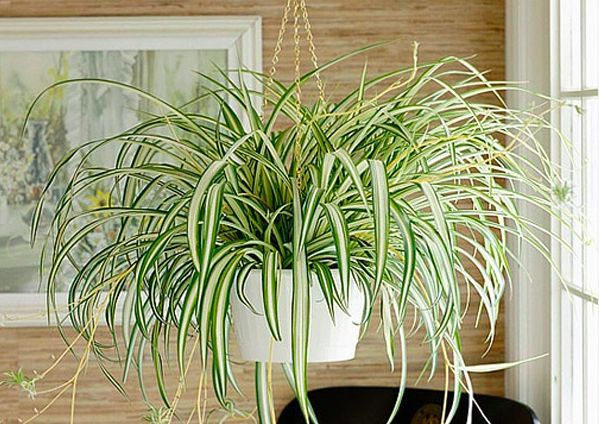 plantas de interior lazo 2