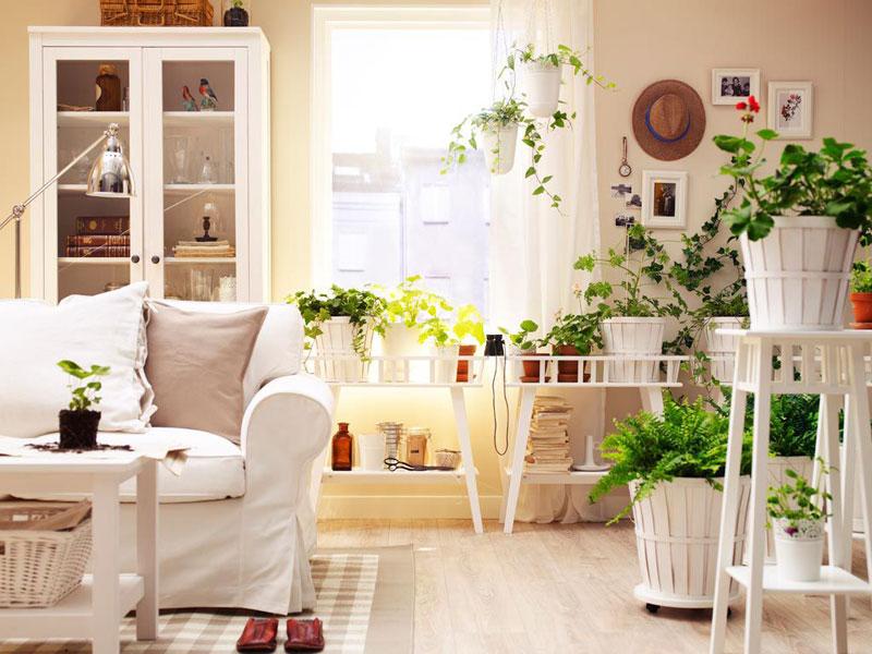 plantas de interior cuidados