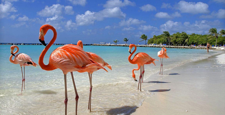 Aruba playas caribeñas