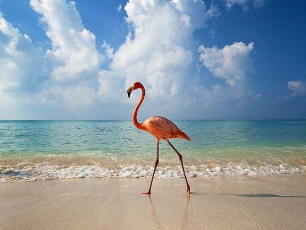 Aruba_Caribe