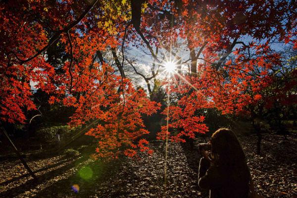 Jardín-Nacional-Shinjuku-Gyoen_600