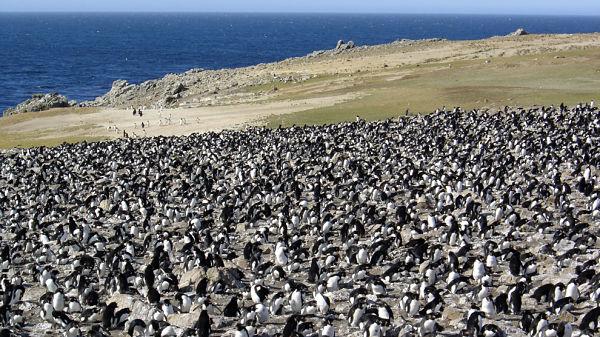 pinguinos 600