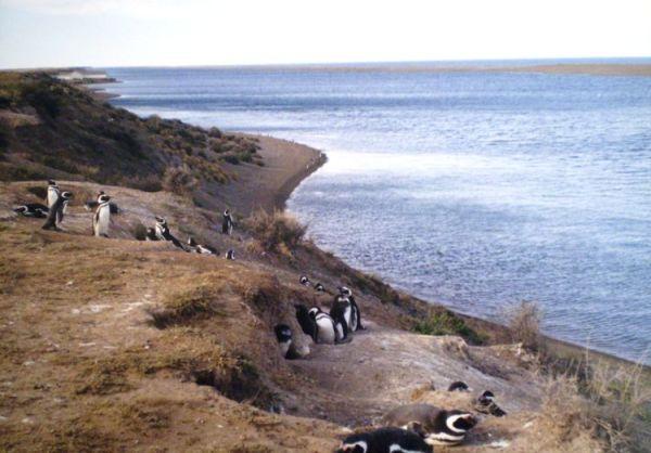 pinguinera_peninsula_valdes