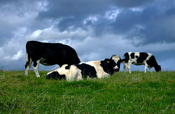 tendencia-alimentos-pastoreo-regenerativo_opt