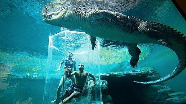 parques-raros-cocodrilos_opt