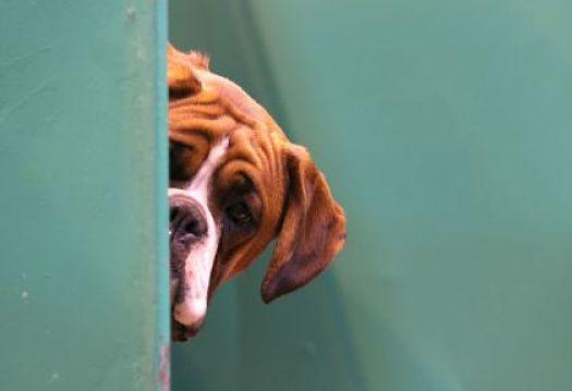 perros-mascotas