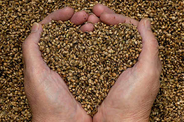 huerta en casa semillas