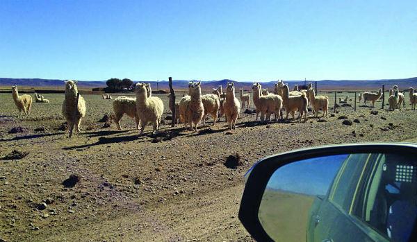 viaje al norte argentino