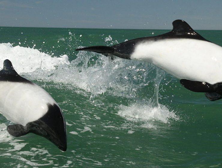 navegar entre delfines