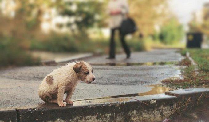 proteccion de mascotas