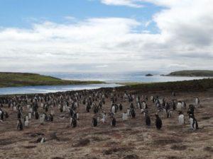 vida silvestre de las islas malvinas