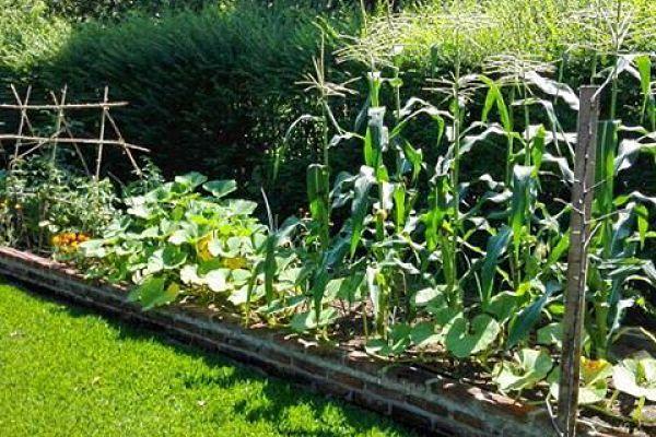 huerta cultivo organico