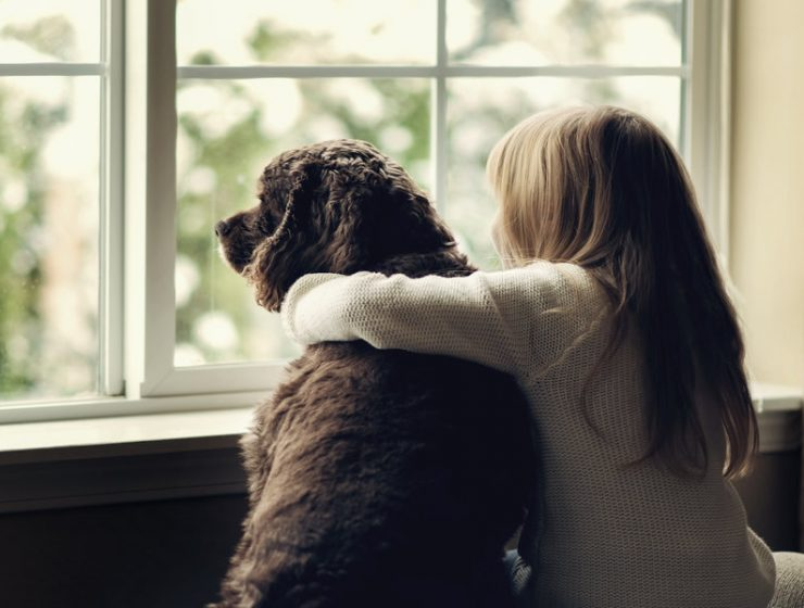 perros tristeza dueños