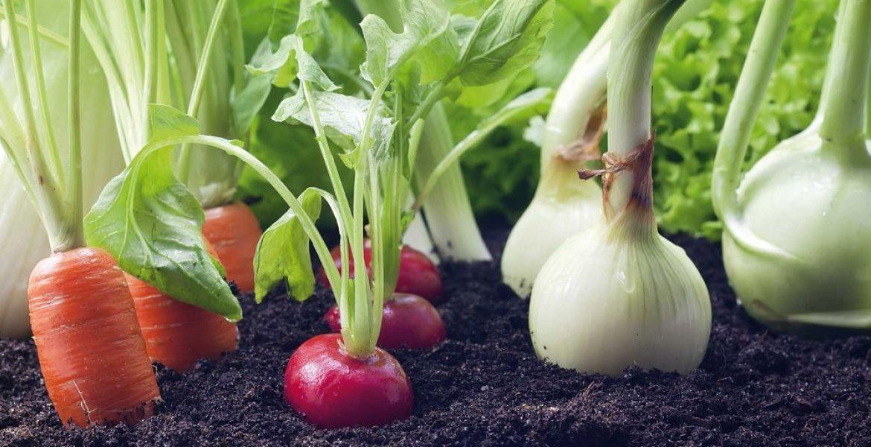 asociar cultivos