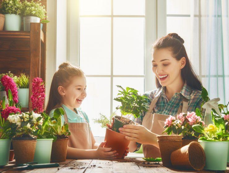 plantas de jardin con flores