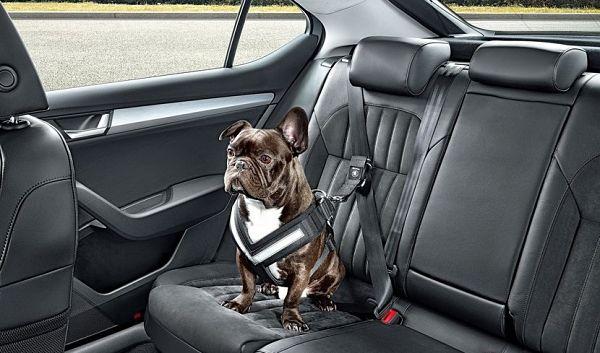 viajar en auto con mascotas